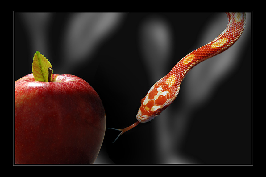 Apple with snake
